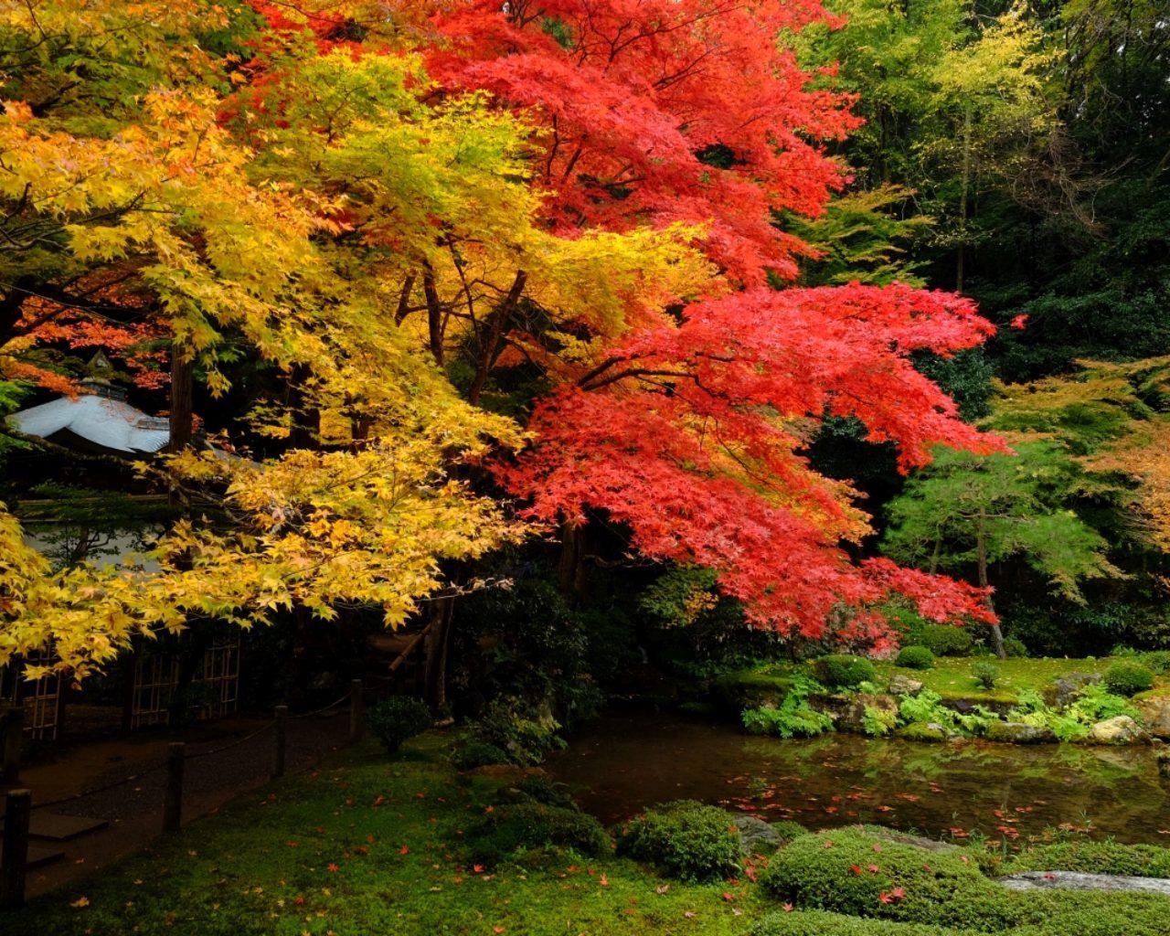 Momiji (autumn colors)